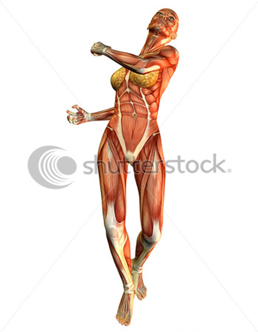 Images of female anatomy
